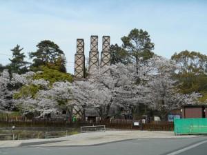 韮山反射炉 桜満開!