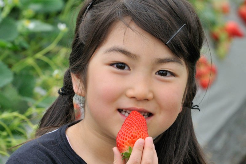 Izunagaoka Strawberry Picking Center