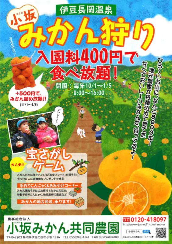 小坂みかん狩り 入園料400円で食べ放題!