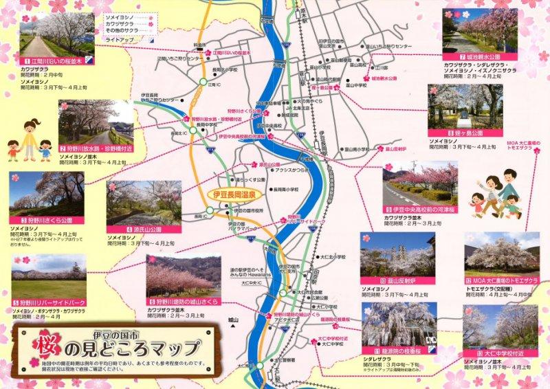 桜の名所巡りをしませんか?