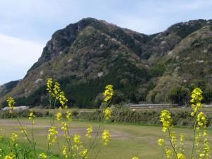 菜の花と城山
